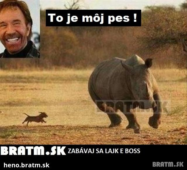 Chuck Norris A Jeho Pes D Bratm Sk