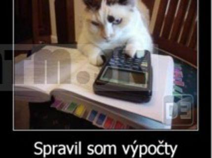 Prekrásne vychcaná mačička :D