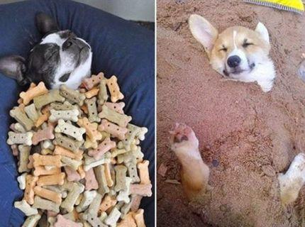 Aj zvieratá si vedia užívať život ako sa patrí :) Pozri si tieto krásne fotografie :)