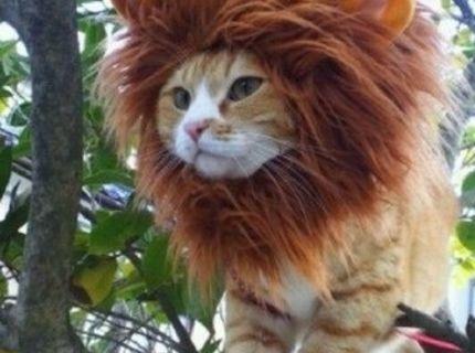 Kráľ džungle!!! :) :D
