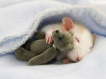 Krysa a jej plyšák :)