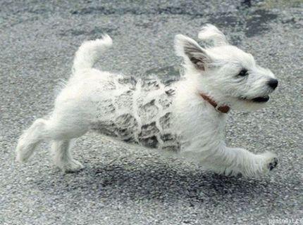 Nesmrteľný pes :)