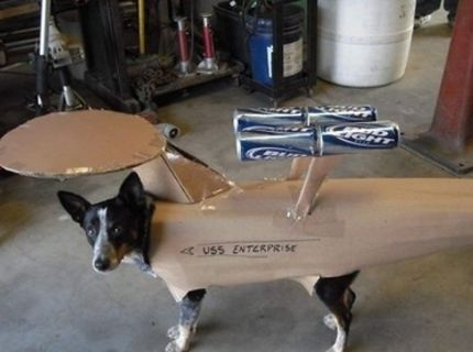 Multifunkčný pes :)