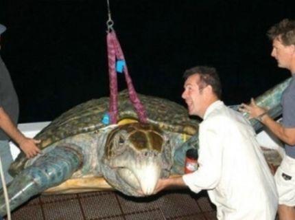 Obrovská korytnačka :O