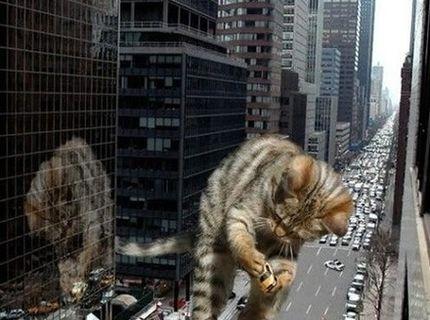 Mačka útočí :D