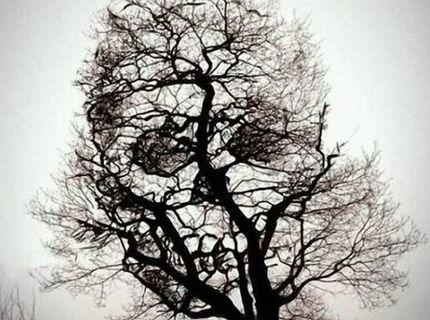 Strašideľný strom :)