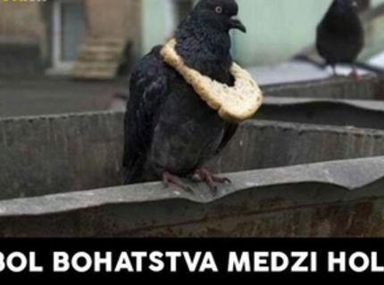 Aj holuby sa delia na kasty...