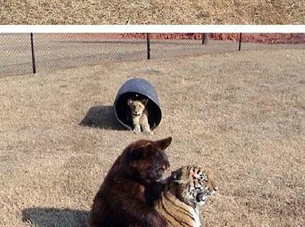 Krásny príbeh zvierat, ktoré boli zhabané drogovému dealerovi. Videli ste už takúto svorku??