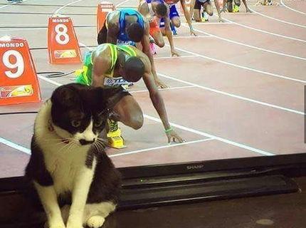 Najlepšia mačka na nete :D