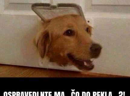 Podarené :D Reakcia psíka sto bodov:D