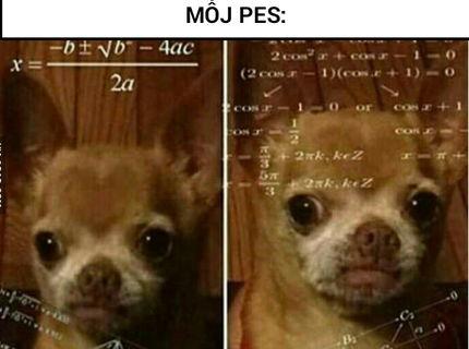 Venčenie psov: Level loptička :D