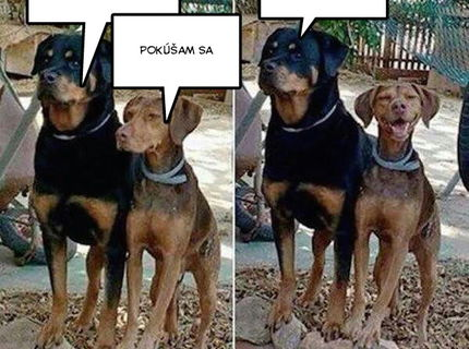 Takto pózujú psy pred fotákom :D