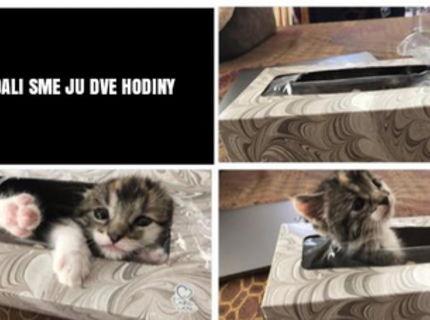 Táto mačička sa stratila... hádaj kde ju našli :D