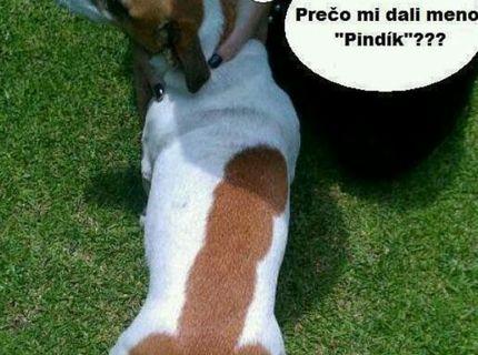Vtipný psík :D