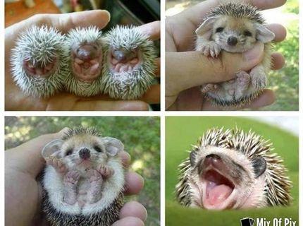 Máš chuť na niečo rozkošné?  nech sa páči! :))