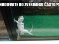 Chodievate do zverimexu často :D :D :D