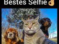 Top animal selfie!
